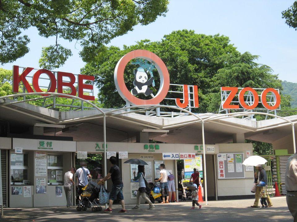 30代男女メイン&王子動物園散策コース