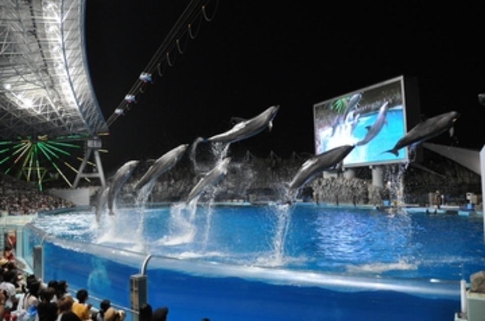 開催中止になります!!ライトアップされた幻想的なイルカのショーを満喫!名古屋水族館ナイトウォーキングコン!