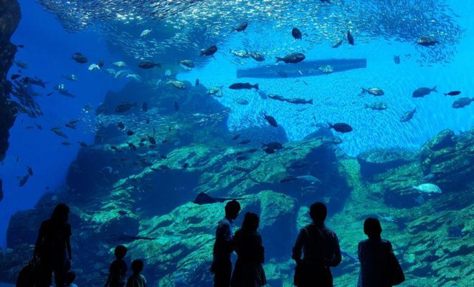 一人でも参加しやすくカップル率が高いと話題の恋愛応援企画のデートコン仙台開催🌸恋する水族館でゆっくりとお互いのことがわかるデートコン💑