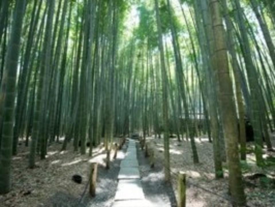 開催中止になります!!鎌倉で竹藪の中で抹茶を堪能ウォーキングコン!!
