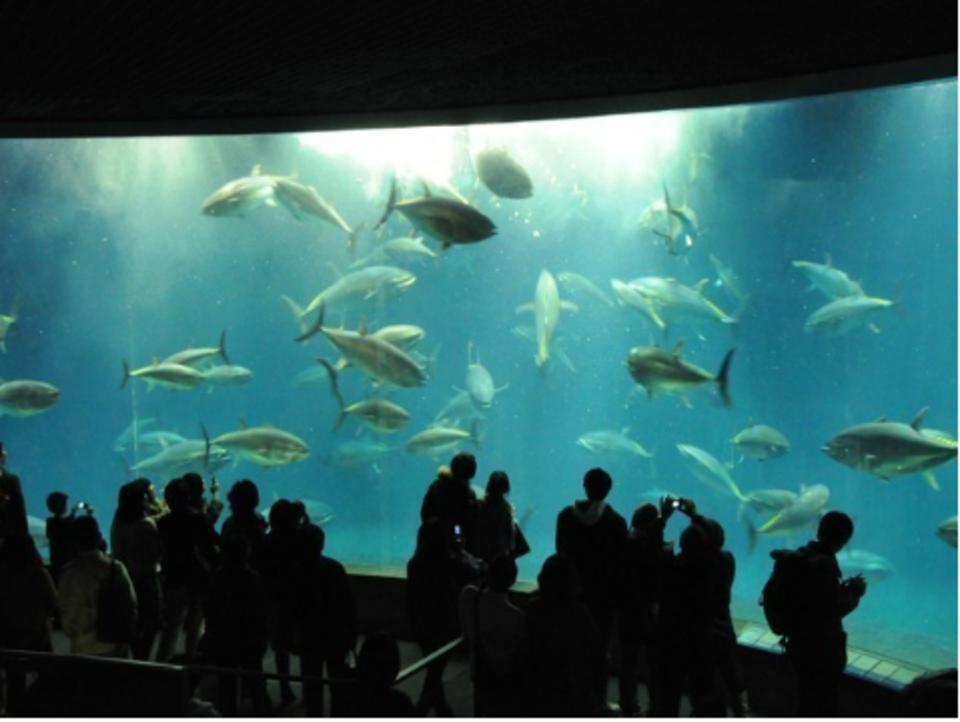 【20代限定企画】室内なので寒くない!お魚たちが恋のキューピッド♡葛西臨海水族館コン☆