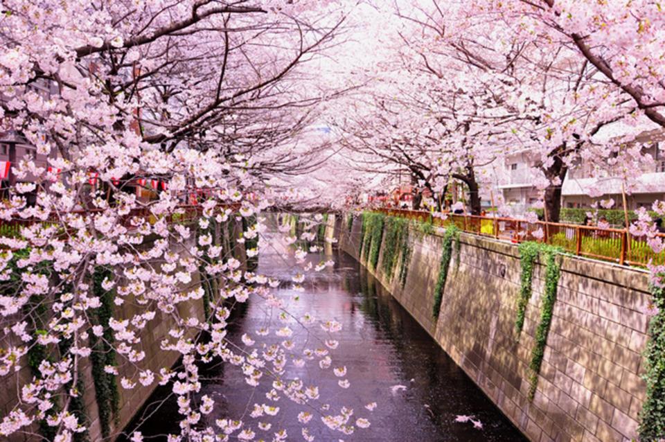 西公園de桜イベント♩