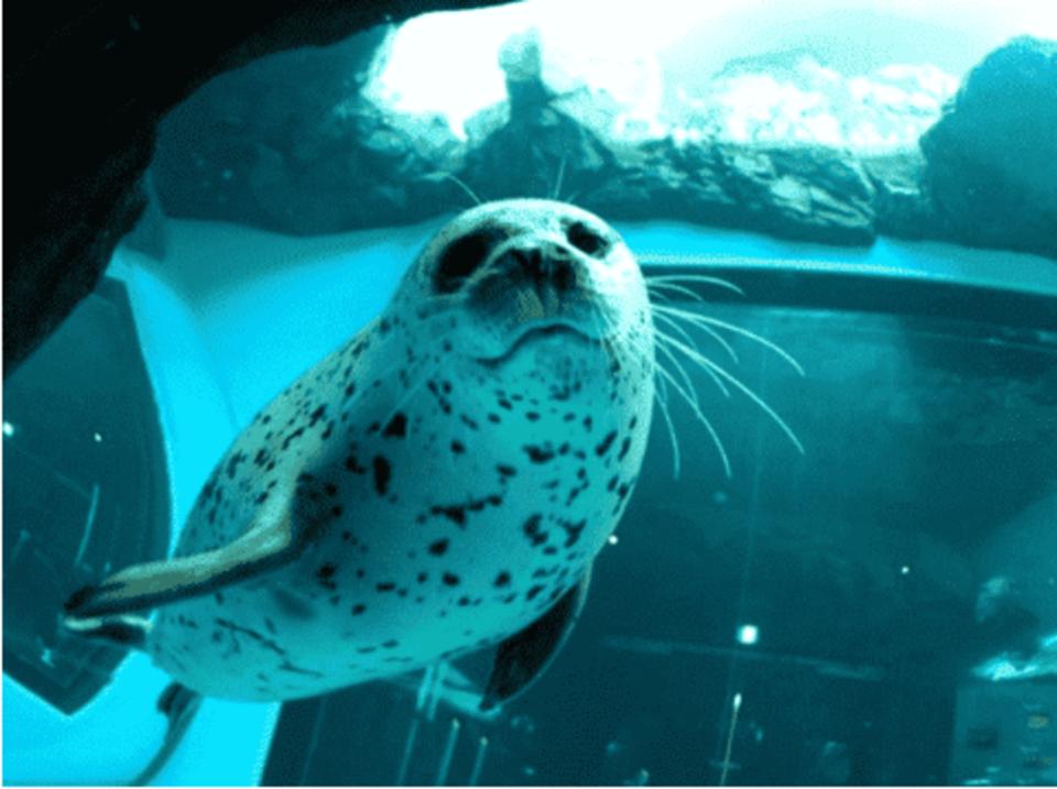 年齢をぎゅっと絞った同世代と出会おう!【27歳〜36歳限定企画】 イルカやアシカのショーで癒される! ! しながわ水族館ウォーキンコン!