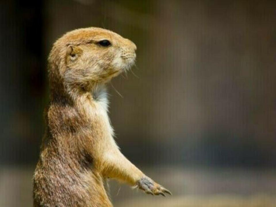※開催中止になります!! 【8月だけの限定企画】 一人参加限定! 明るい時とは一味違う!ナイト上野動物園ウォーキングコン♡ 8/16開催