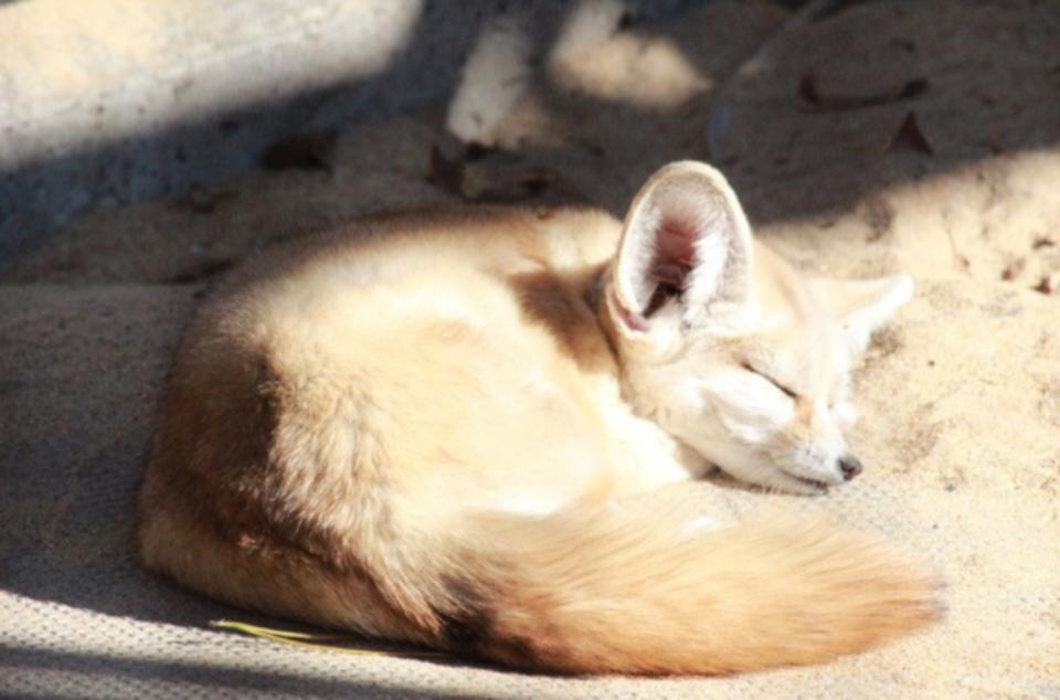 【一人参加限定】 井の頭動物園&公園ウォーキングコン☆爽やかな景色と動物たちガ男女の仲を深めます♡ 9/4開催