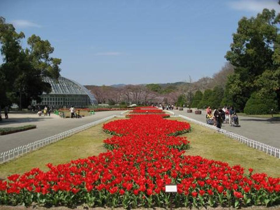 お花と自然を楽しむ京都府立植物園散策コース 【男女共に26-38歳】
