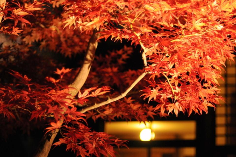 男性先行中!女性急募!!小金井公園にて期間限定!江戸たてもの園!紅葉ライトアップウォーキングコン♪30代40代コン