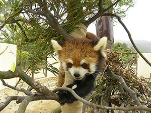 京都市動物園をお散歩婚活