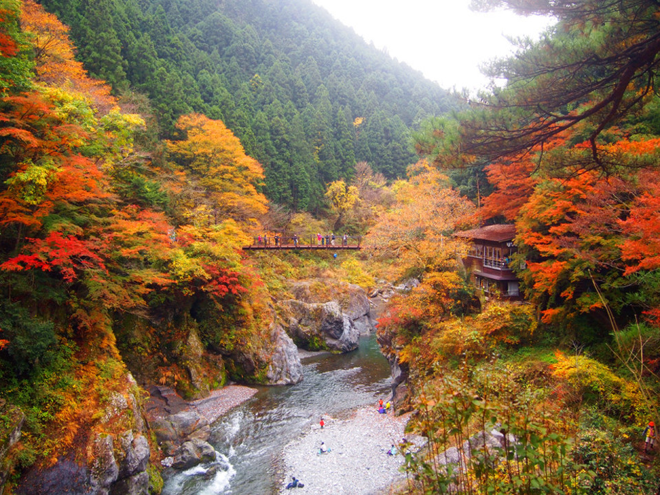 渓谷のせせらぎを聞きながら紅葉を楽しむ!新宿より1時間と少し。御岳渓谷紅葉ウォーキングコン!