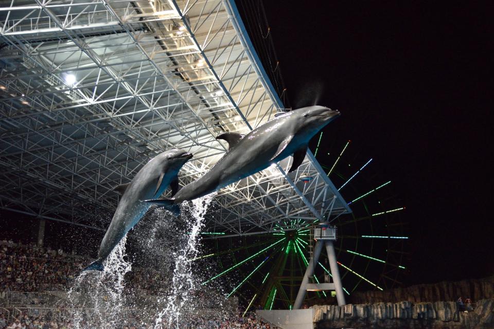 幻想的なイルカのショーを満喫!名古屋水族館ナイトコン!