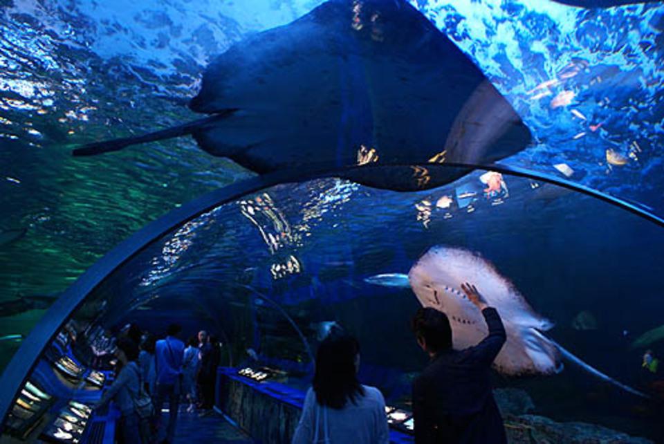 開催中止になります!!水族館でデート気分!イルカやアシカのショーも楽しめる!水族館鑑賞&公園ウォーキングコン!
