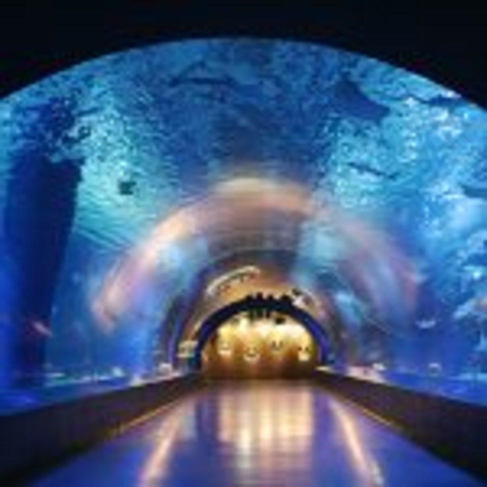 【20代限定企画】しながわ水族館へ!大人の遠足!イルカやアシカのショーも楽しめる!水族館鑑賞&公園ウォーキングコン!(