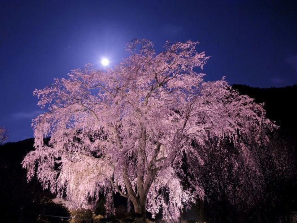 女性先行中!男性急募!期間限定!幻想的な世界を堪能!六義園ライトアップ夜桜ウォーキングコン!