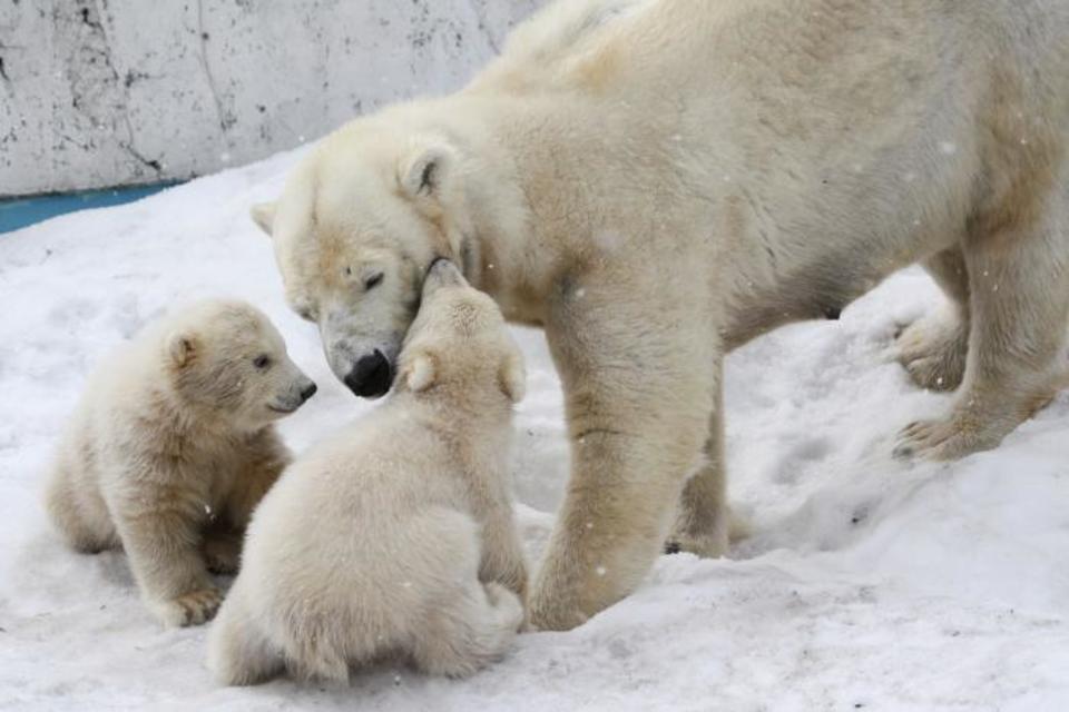 動物たちに癒される!!上野動物園に人気のパンダを見に行こう!動物園ウォーキングコン!