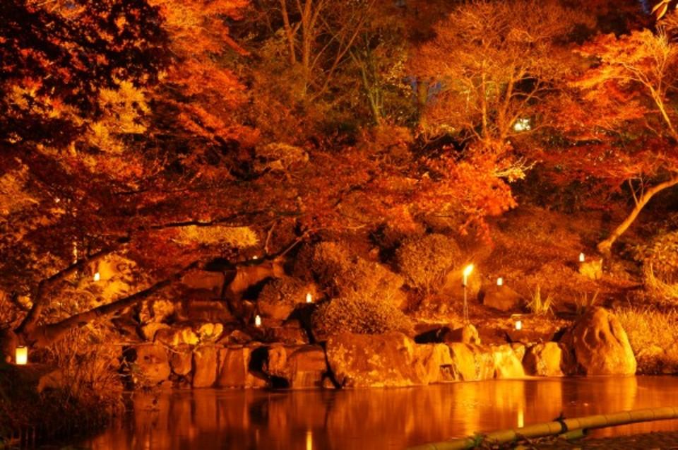 秋の紅葉のトンネルができ晩秋の風情とローズフェスティバル!須磨離宮公園ウォーキングコン!