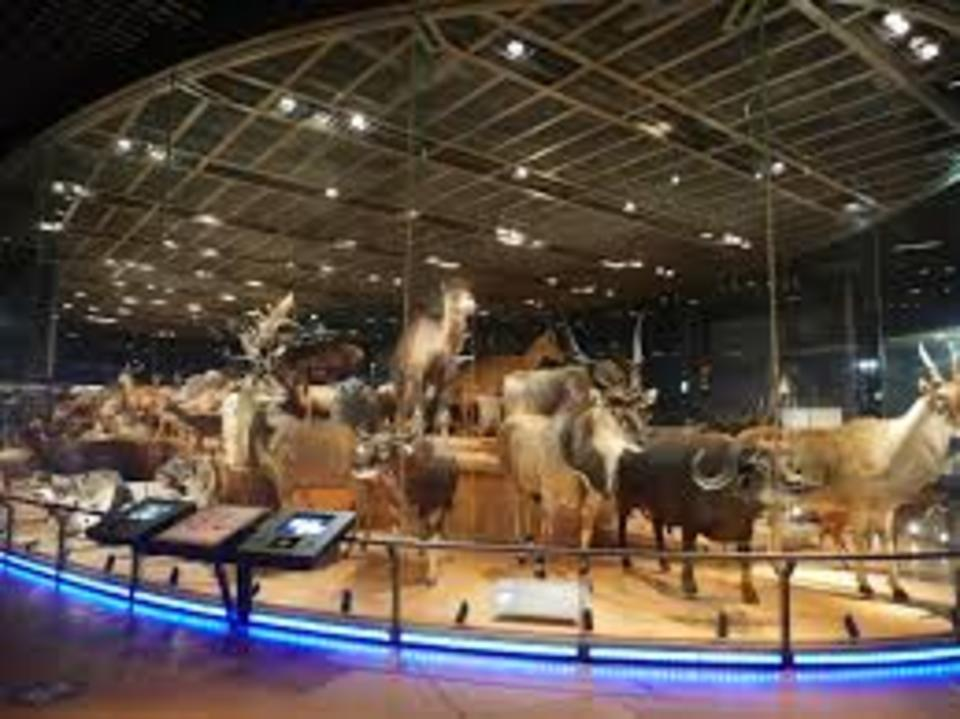 世界遺産をめぐる!大人遠足!上野美術館&博物館ウォーキングコン!