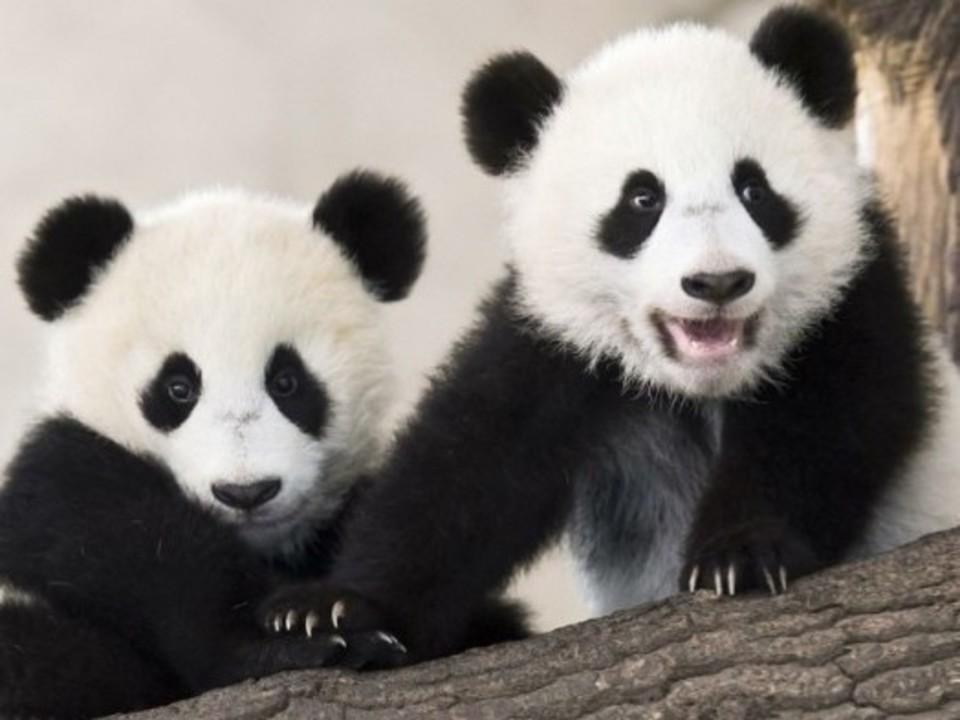 【一人参加限定】 上野動物園ウォーキングコン☆ 愛くるしい動物達が男女恋をサポート♡