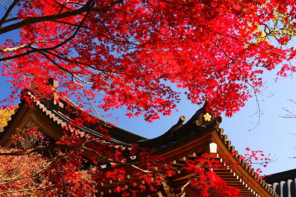 開催中止になります!!!深大寺の紅葉を楽しもう!調布紅葉パワースポットウォーキングコン!