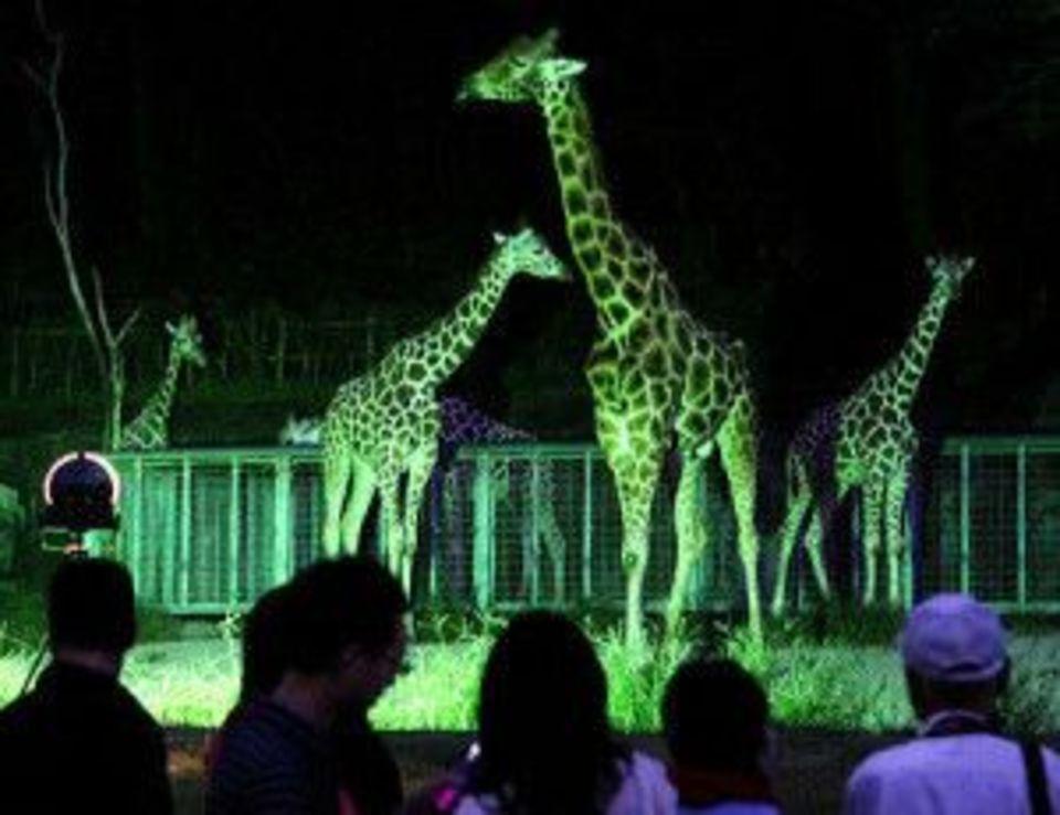 動物たちに癒されよう!動物好き!上野動物園に人気のパンダを見に行こう!ウォーキング