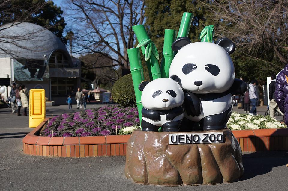 女性満員!男性急募!紅葉見頃!上野動物園!紅葉と人気のパンダを見に行こう!動物園紅葉ウォーキングコン!