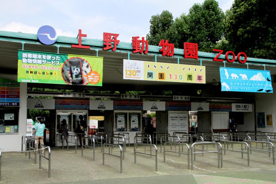 開催中止!動物たちに癒されよう!上野のパンダを見に行こう♪上野動物園巡る30代40代ウォーキングコン!