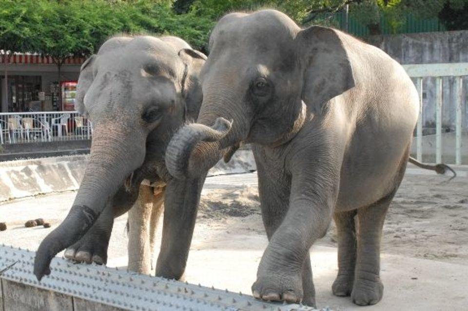 【女性20代限定企画】動物たちに癒される!上野動物園に人気のパンダを見に行こう!動物園ウォーキングコン!