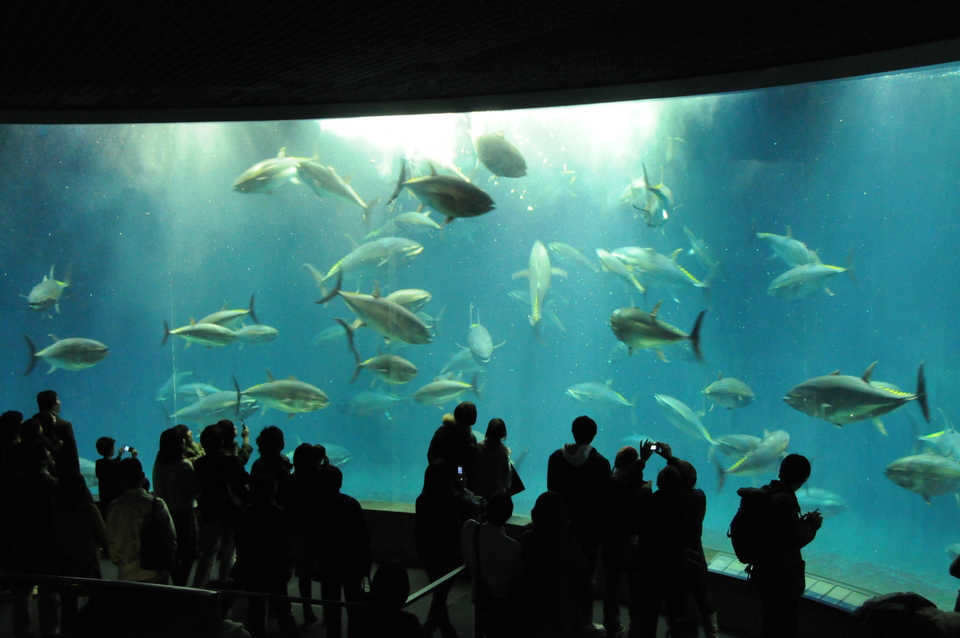 キュートなペンギン達に会いに行こう!葛西水族館見学&公園ウォーキングコン