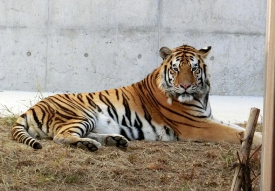 「動物と自然を楽しむ天王寺動物園散策コース」